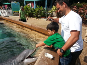 Alimentar os golfinhos no Dolphin Cove do Sea World.