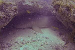 Mergulho com tubarões.