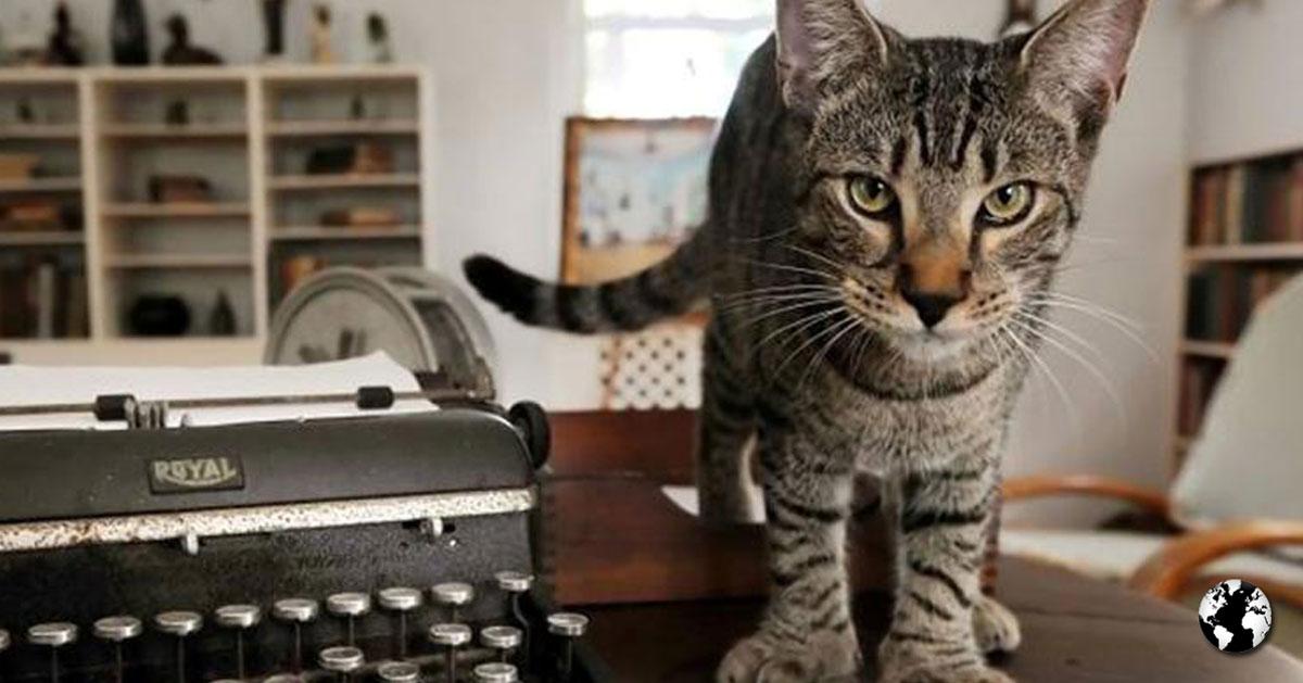 Os gatos de Hemingway.